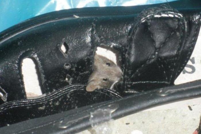 Inspektoři našli v letovickém Penny Marketu myši