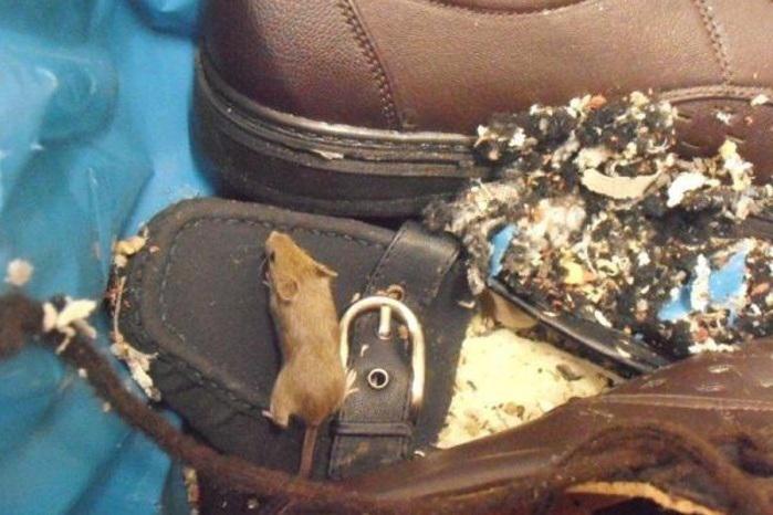 Inspektoři našli v supermarketu myší hnízda