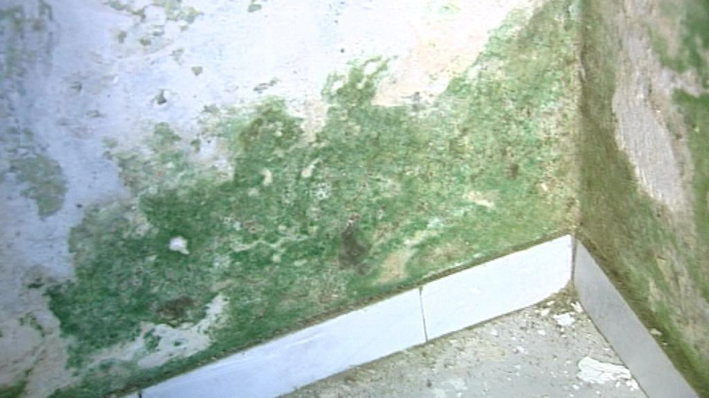 Plesnivá zeď na OÚ v Rejštejně