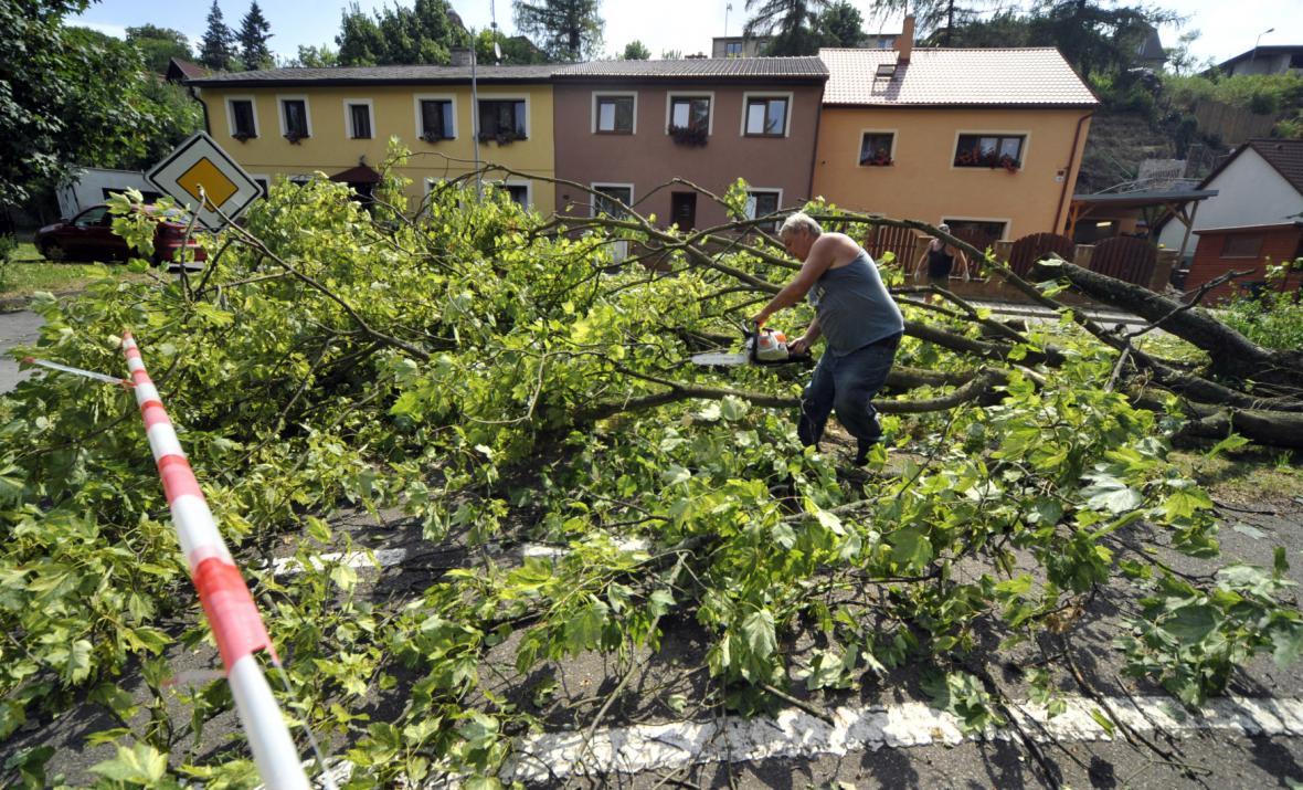 Spadlý strom v Jihlavě