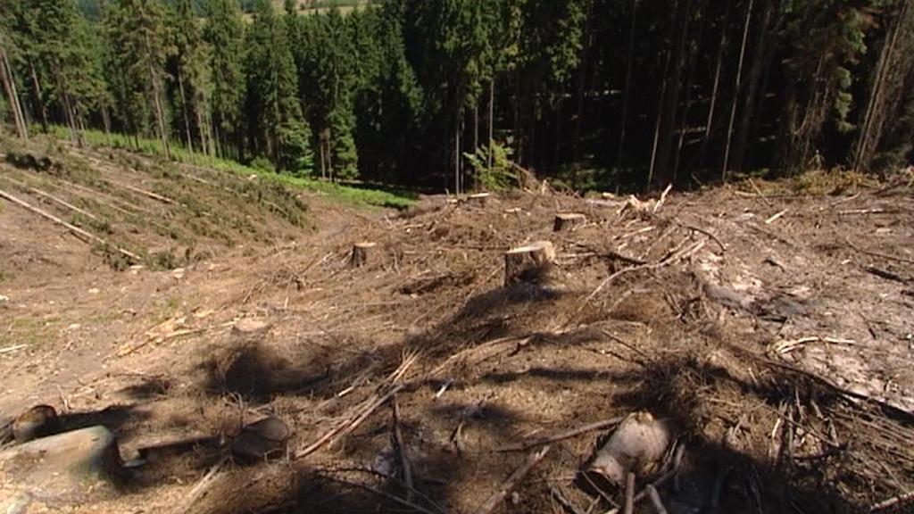 Vykácený les