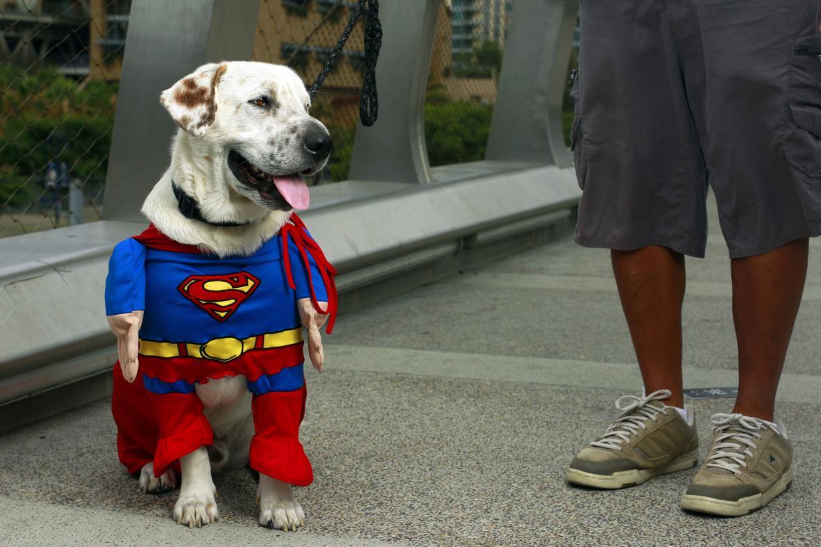 Pes v oblečku Supermana na Comic-Conu 2013