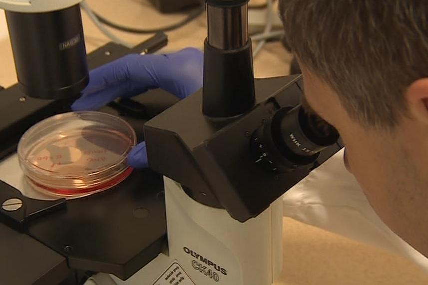 Vědci budou pikornaviry zkoumat pět let