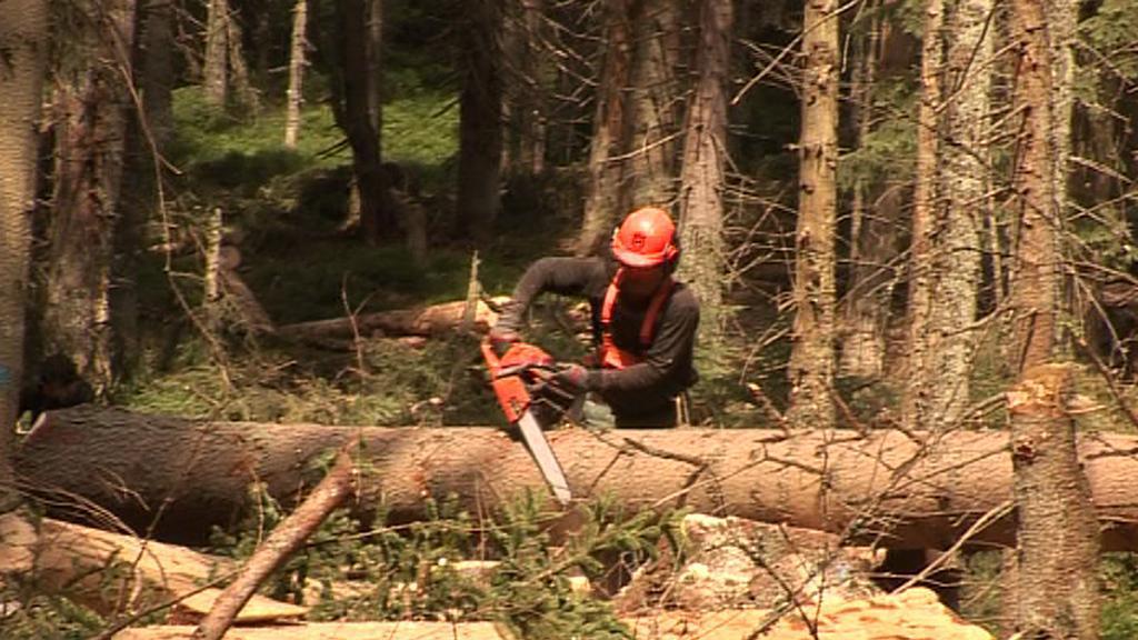 Dřevorubec očišťuje strom