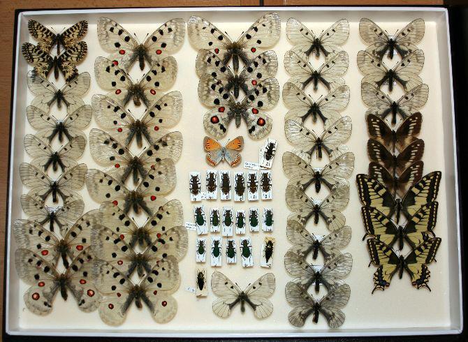 Zadržení motýli a brouci
