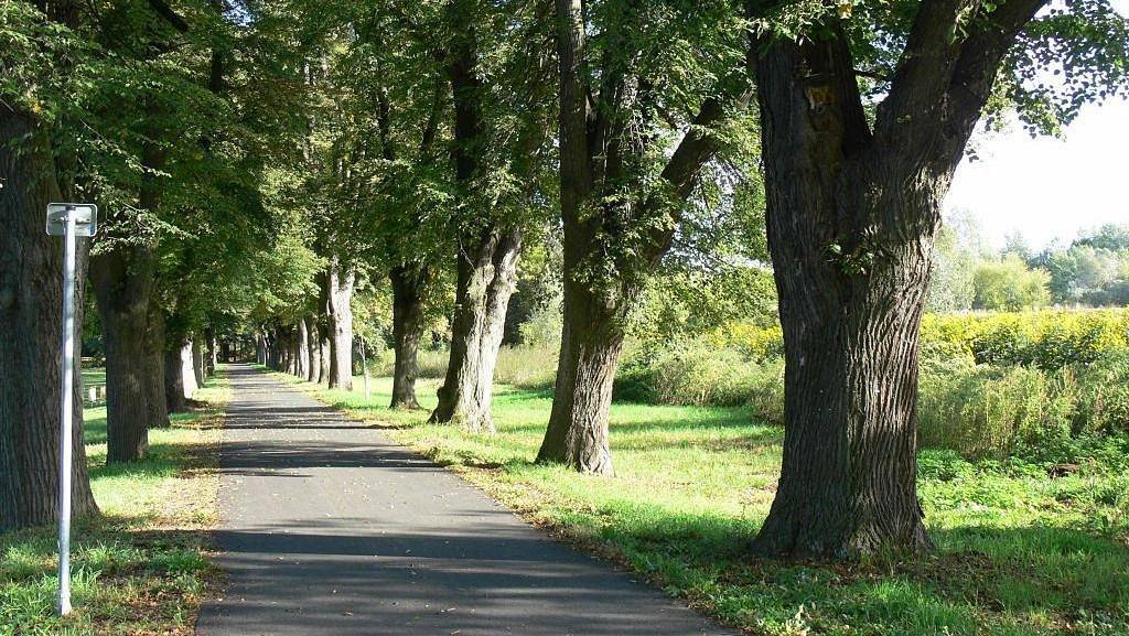 Stromořadí u silnice