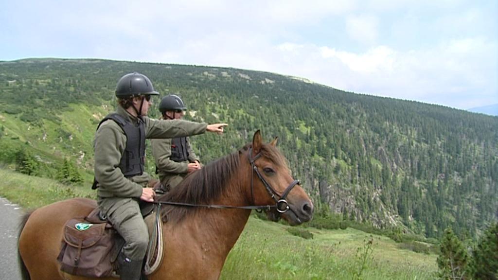 Koně v Krkonoších