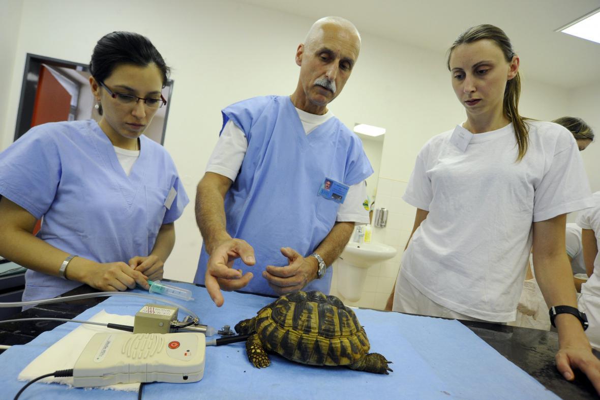Studenti se učí, jak želvu vykastrovat nebo jí opravit krunýř