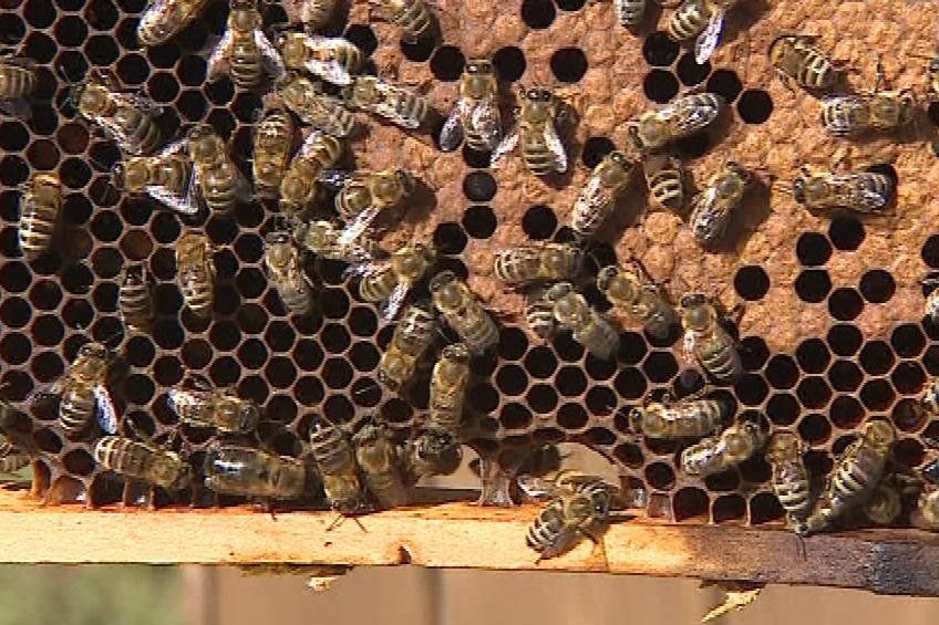 Letos bude málo medu