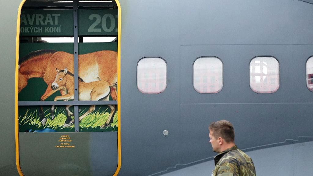 Transport koní Převalského do Mongolska