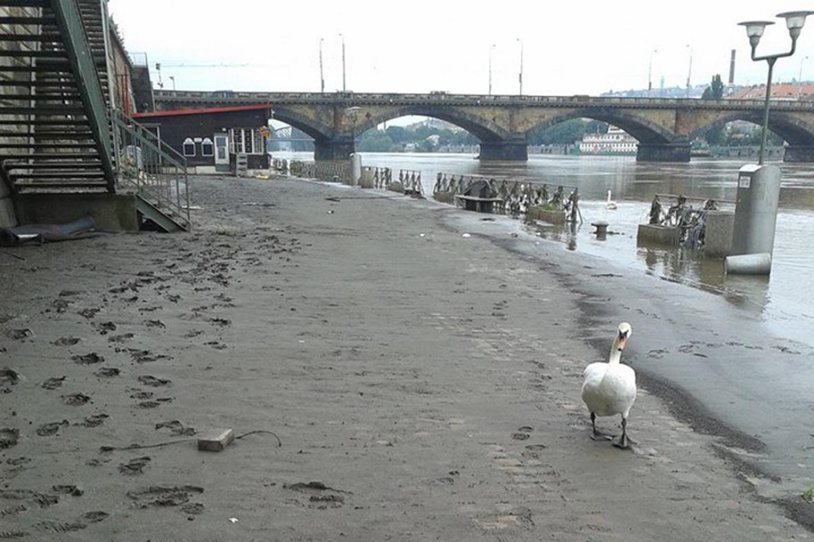 Pražská náplavka po povodni
