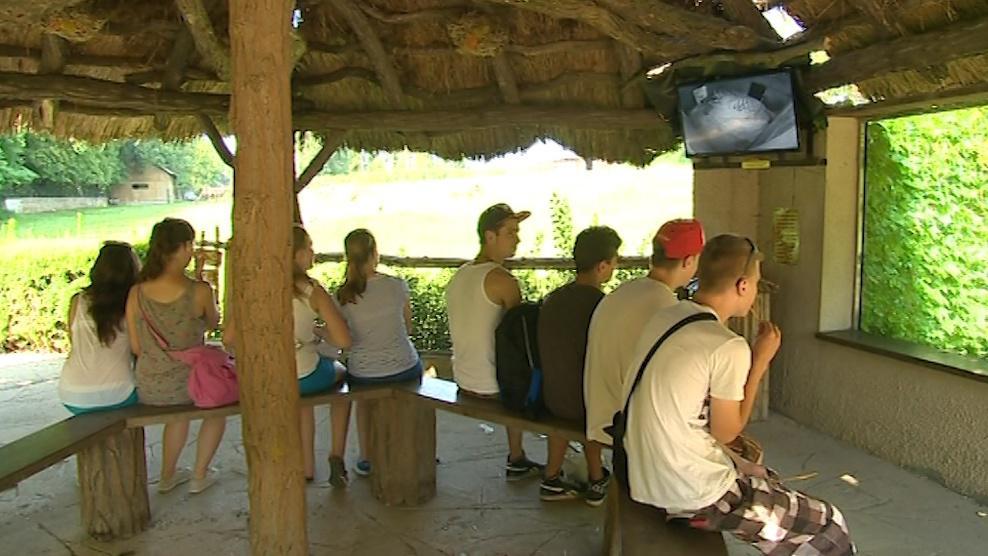 Návštěvníci zoo si na mláďata musí ještě dva měsíce počkat