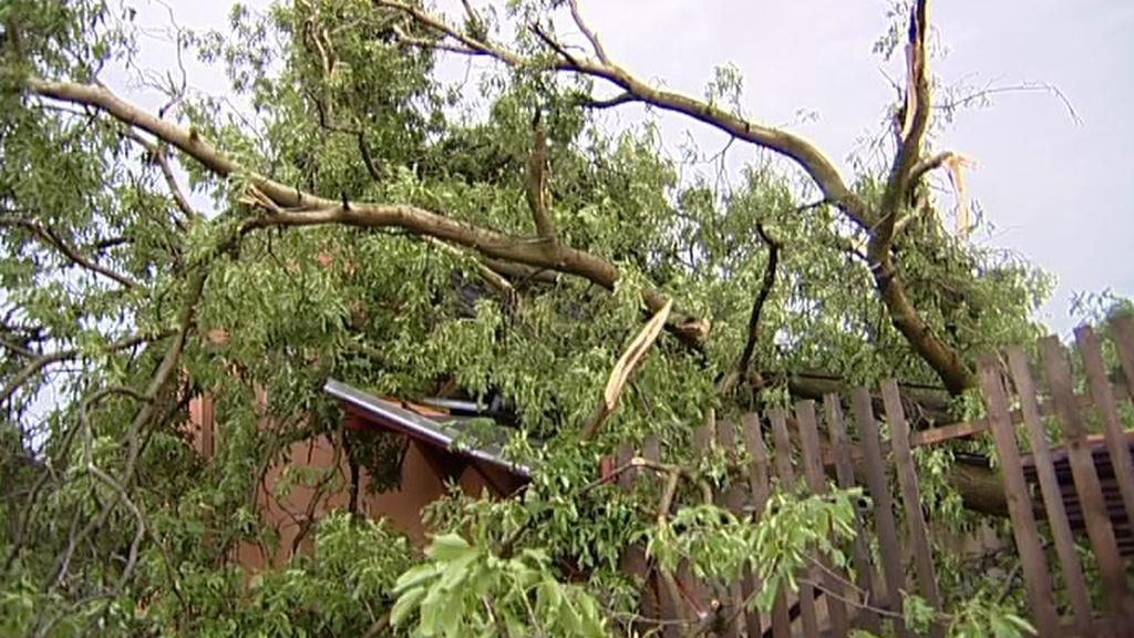 Popadané stromy po bouřce v Krnově