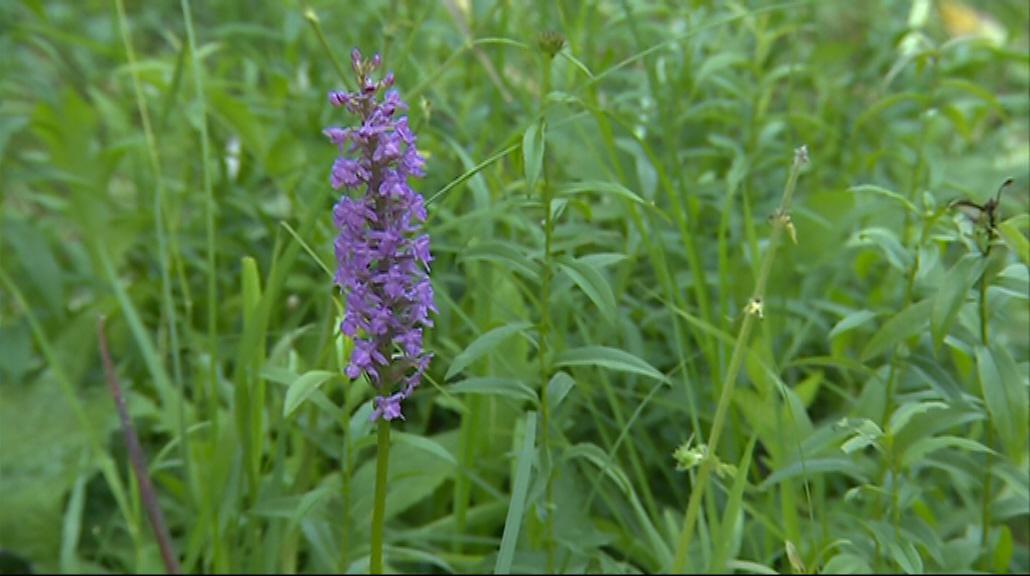 Ruční kosení pomůže zachovat pestrou paletu rostlin