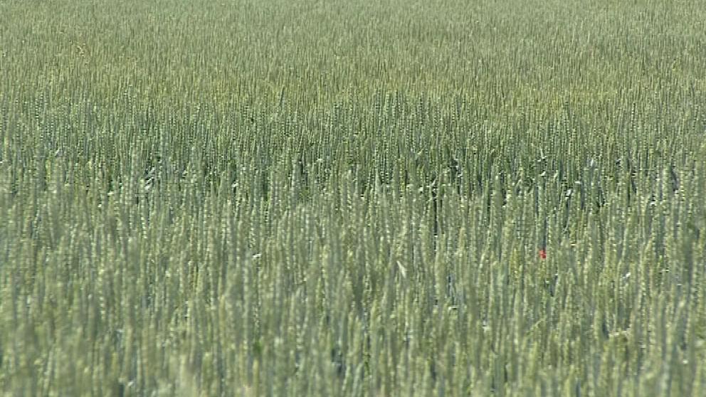 Vloni zemědělci přišli o úrodu kvůli suchu