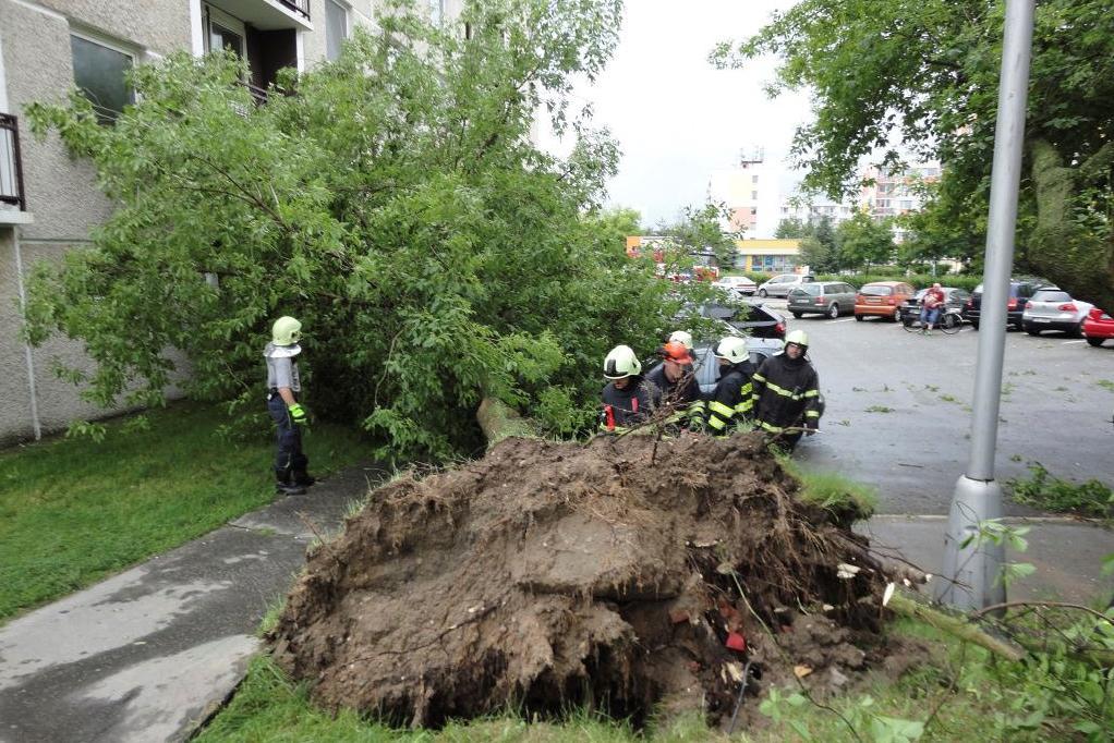 Vyvrácený strom v Hradci Králové