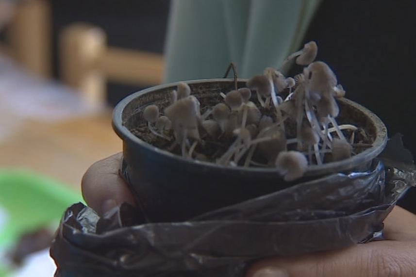 O odbornou radu je v případě houbaření zájem