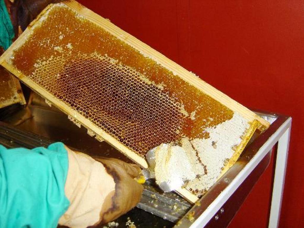 Zpracování medu