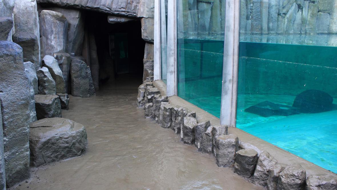 Zatopený pavilon lachtanů