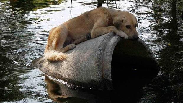 Některá zvířata do útulků doslova připlavala