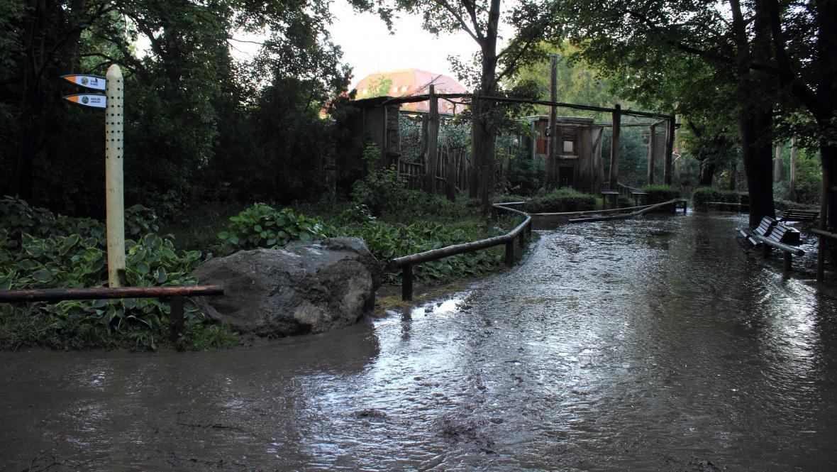 Voda v pražské zoo opadává (5.6.2013)