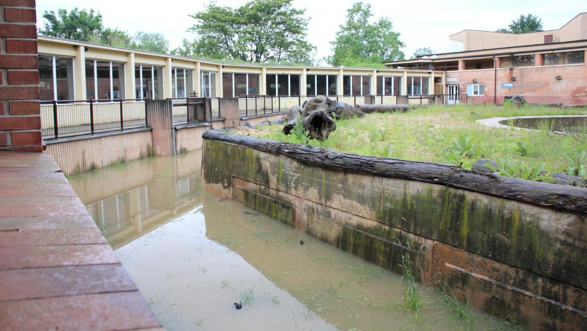 Starý sloninec v zatopené pražské zoo