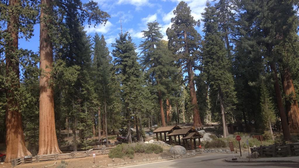 Turistické odpočívadlo v N.P. Sequoia