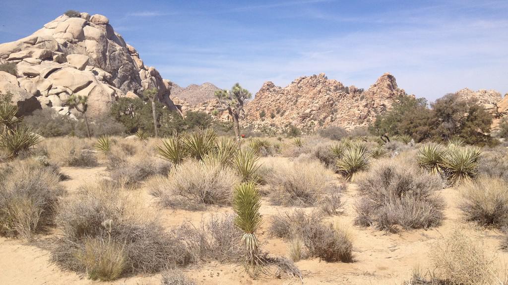 Typická scenérie v N.P. Joshua Tree