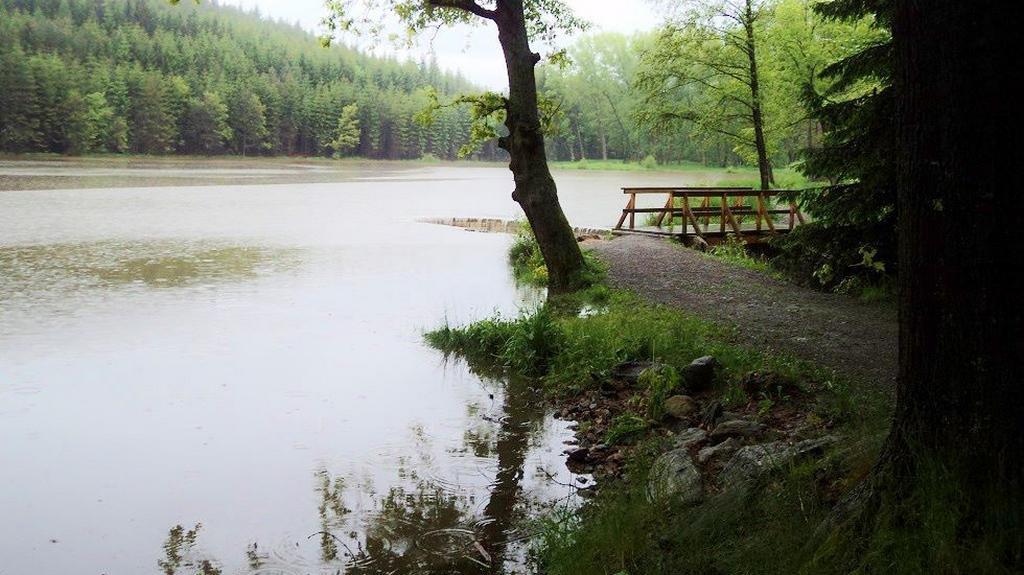 Zelenovský rybník u Domažlic