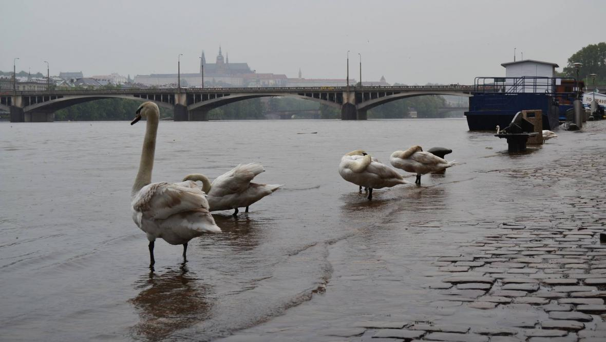 Náplavka u Vltavy v centru Prahy