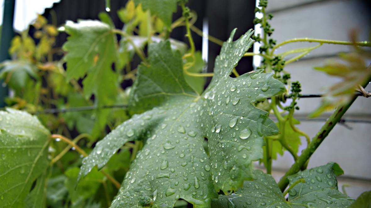 Déšť v Bzenci