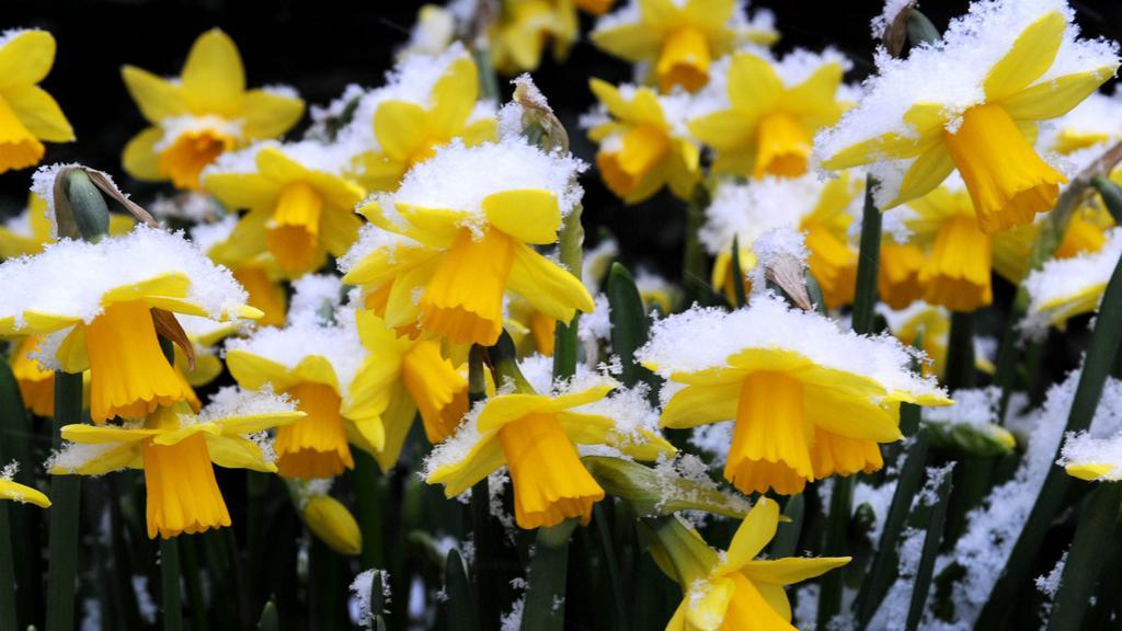Velikonoce budou letos na sněhu
