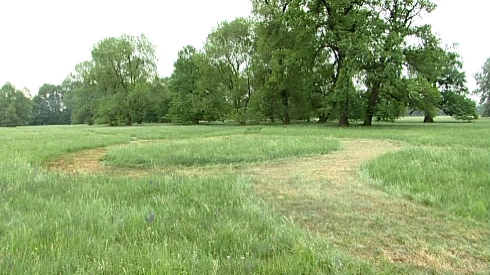 Původní strukturu zednářské zahrady naznačilo vysekání trávy