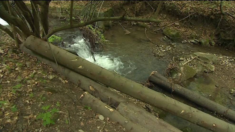 Lesy ČR čelí kritice za nešetrnou těžbu dřeva