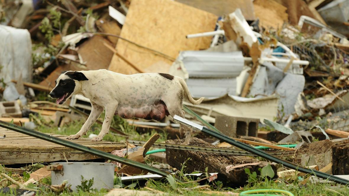 Fena hledá v troskách domu svá štěňata