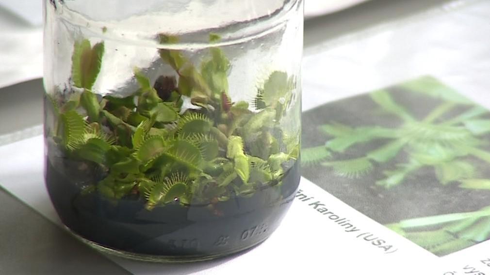 Fascinace rostlinami se konala už podruhé