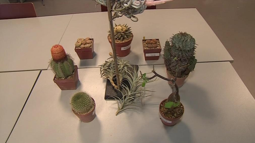 Sukulentní rostliny umí nejlépe hospodařit s vodou