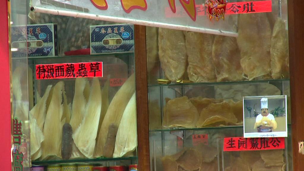 Prodej žraločích ploutví
