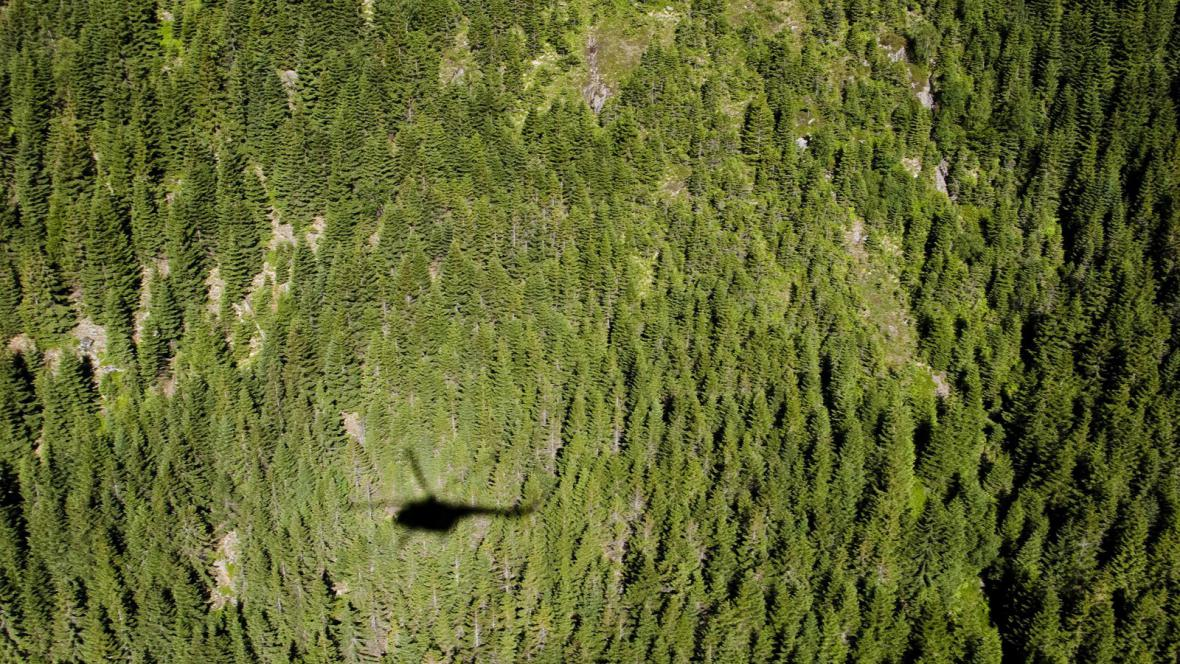Šumavský les