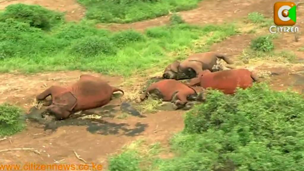 Sloni zabití pytláky