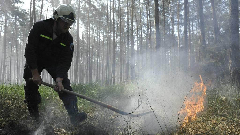 Lesní požár