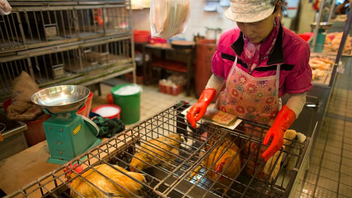 Drůbeží trh v Číně