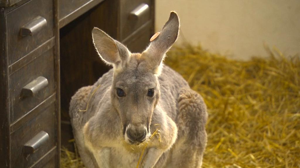 Australská farma v jihlavské zoo
