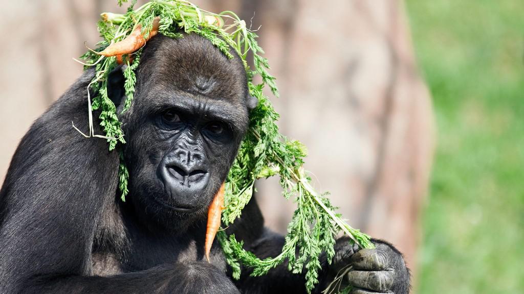 Gorila Moja