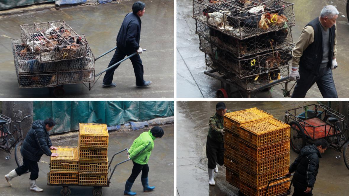Likvidace drůbeže se šanghajské tržnice