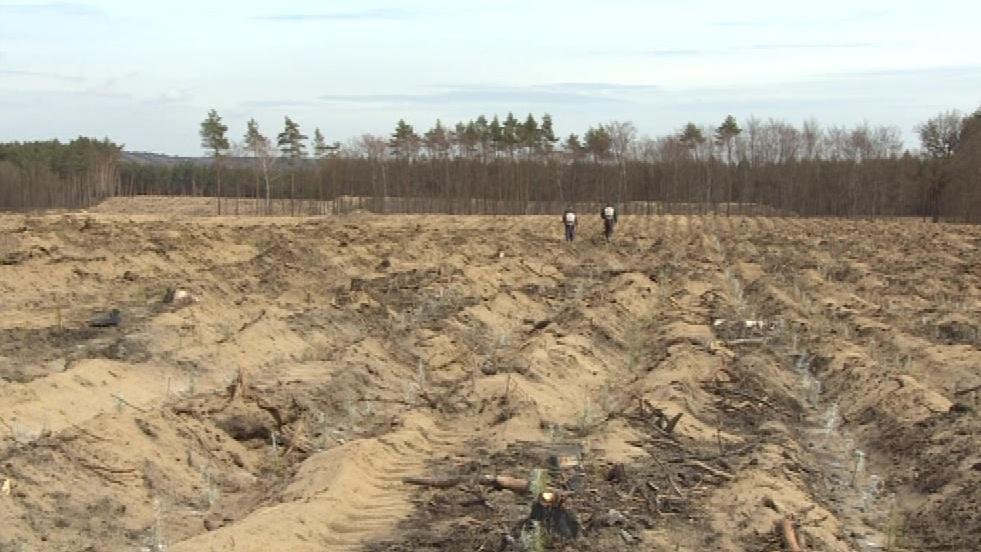 Než  nově vysazené stromky dorostou, potrvá to sto let