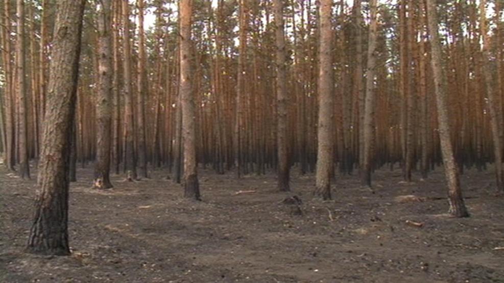 Ohořelé stromy v lese u Bzence