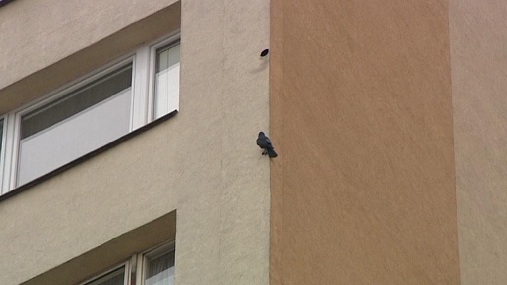 Ptáci poškozují fasády