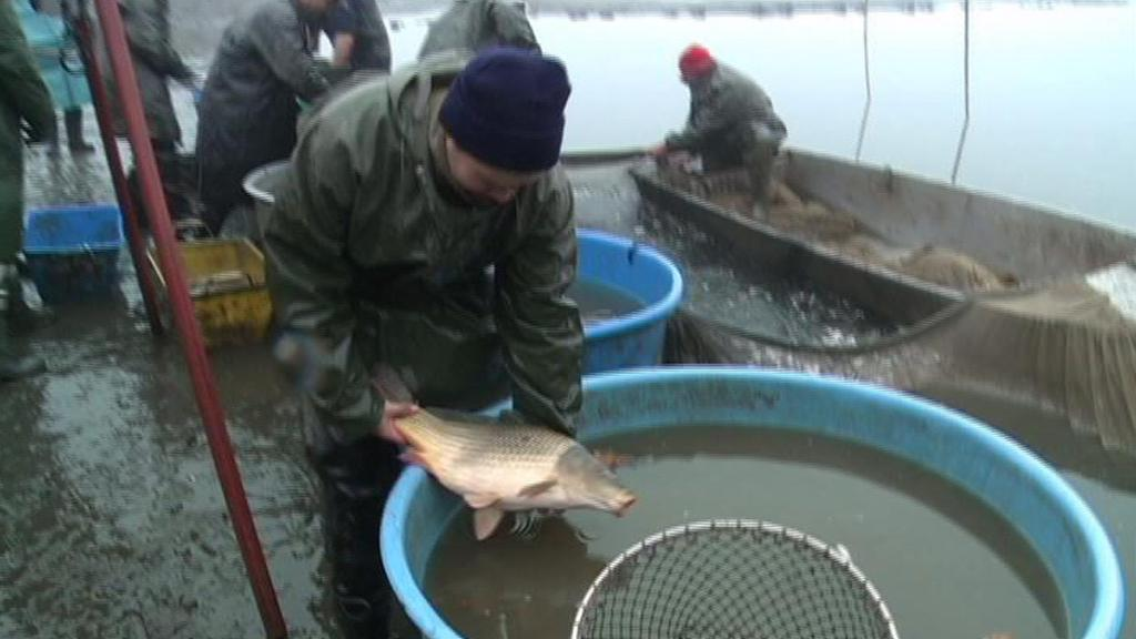 Další vypouštění plumlovského rybníka