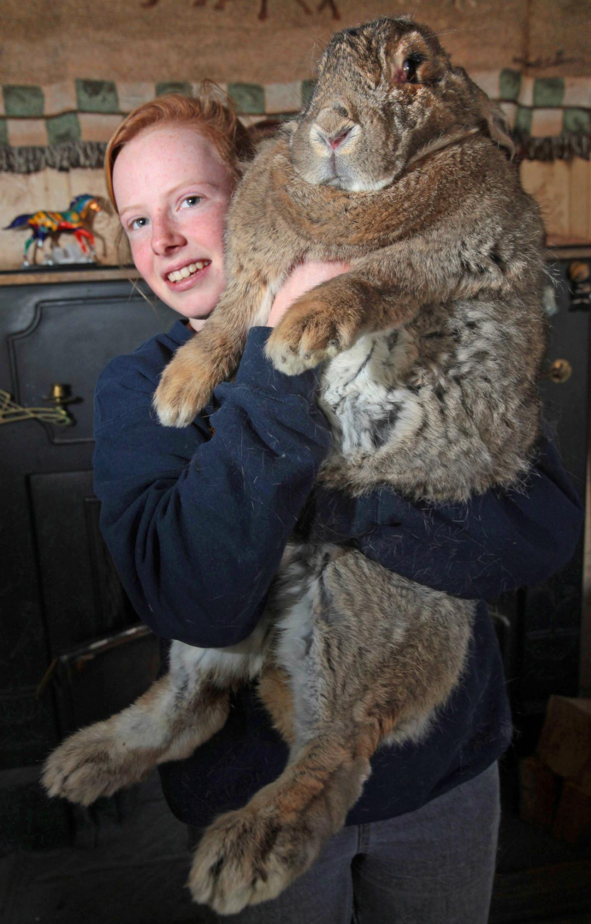 Obrovský králík Ralph